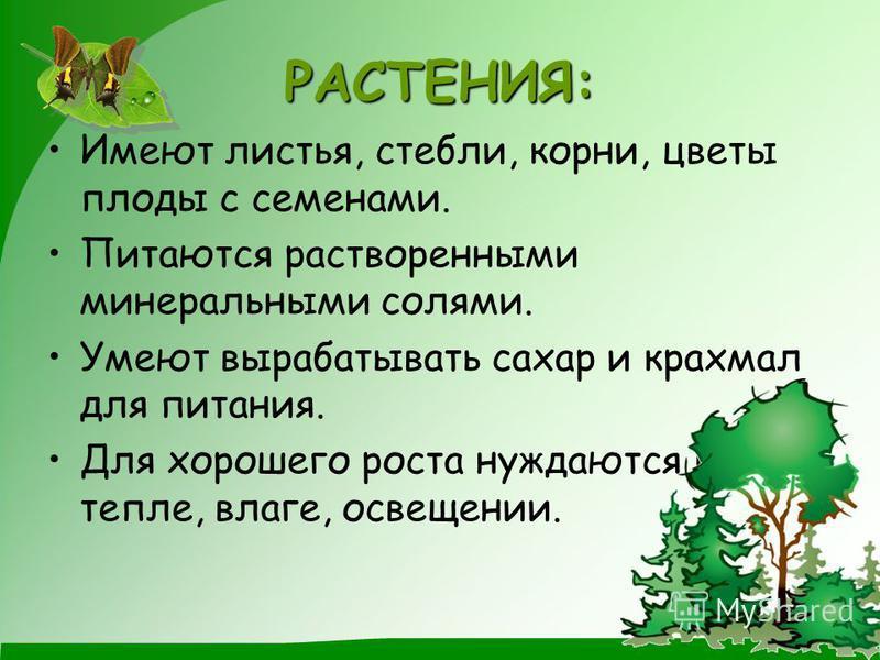 РАСТЕНИЯ: Имеют листья, стебли, корни, цветы плоды с семенами. Питаются растворенными минеральными солями. Умеют вырабатывать сахар и крахмал для питания. Для хорошего роста нуждаются в тепле, влаге, освещении.