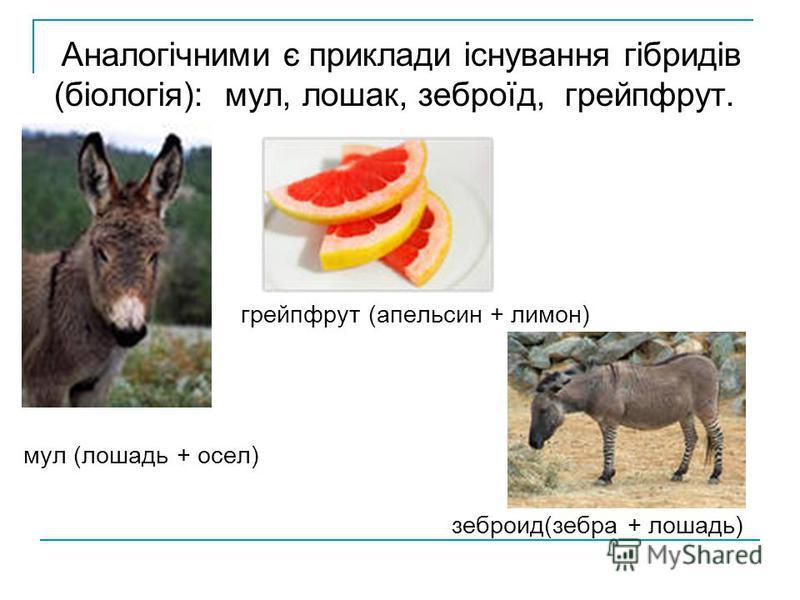 Аналогічними є приклади існування гібридів (біологія): мул, лошак, зеброїд, грейпфрут. грейпфрут (апельсин + лимон) мул (лошадь + осел) зеброид(зебра + лошадь)
