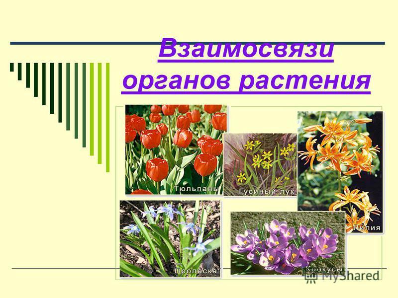 Взаимосвязи органов растения
