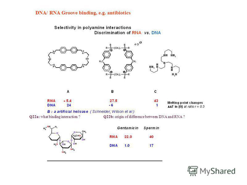 DNA/ RNA Groove binding, e.g. antibiotics Q22a: what binding interaction ?Q22b: origin of difference between DNA and RNA ?