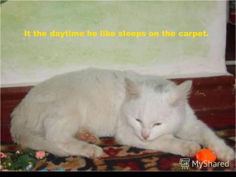 It the daytime he like sleeps on the carpet.