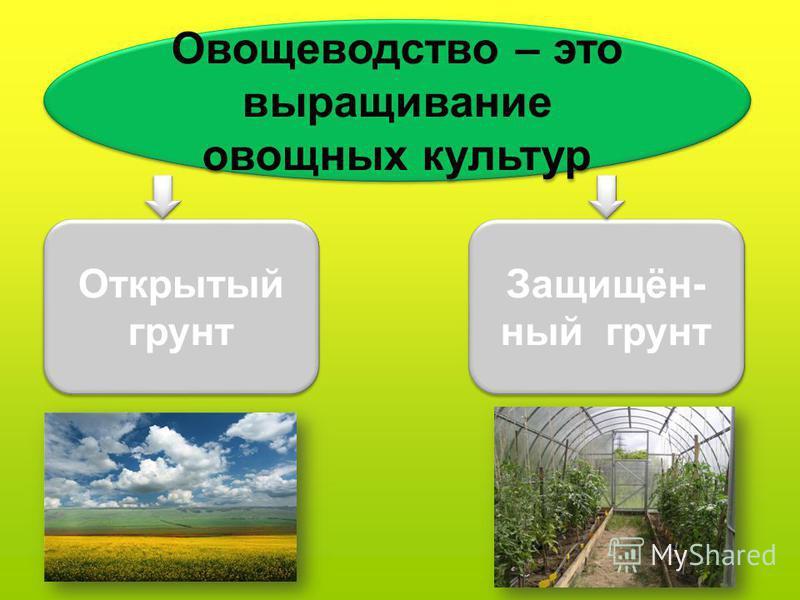 Овощеводетство – это выращивание овощных культур Открытый грунт Защищён- ный грунт