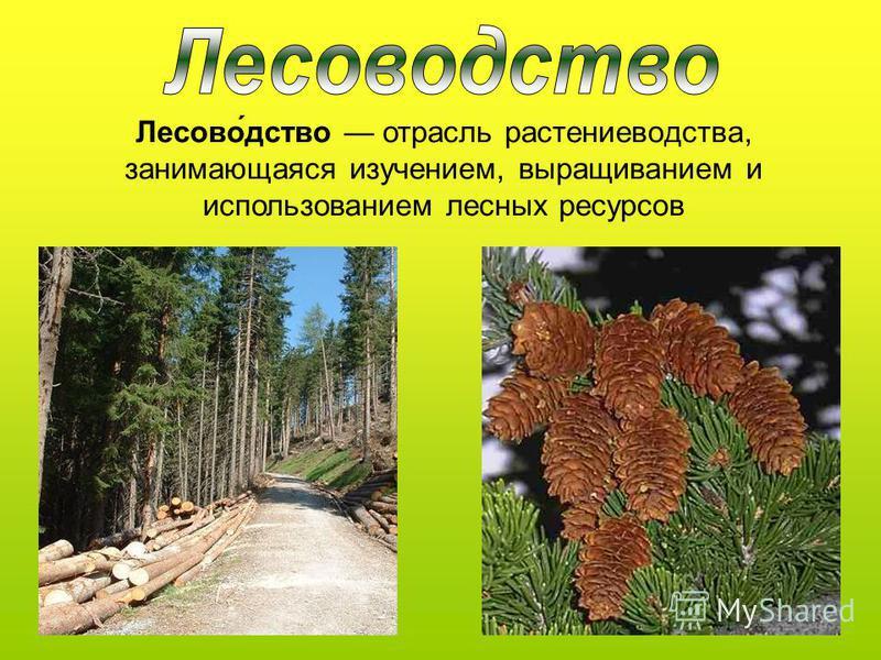 Лесово́детство отрасль растениеводства, занимающаяся изучением, выращиванием и использованием лесных ресурсов