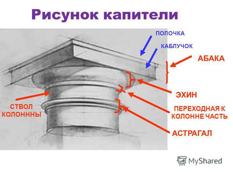 Рисунок капители АБАКА ПОЛОЧКА КАБЛУЧОК ЭХИН ПЕРЕХОДНАЯ К КОЛОННЕ ЧАСТЬ СТВОЛ КОЛОНННЫ АСТРАГАЛ