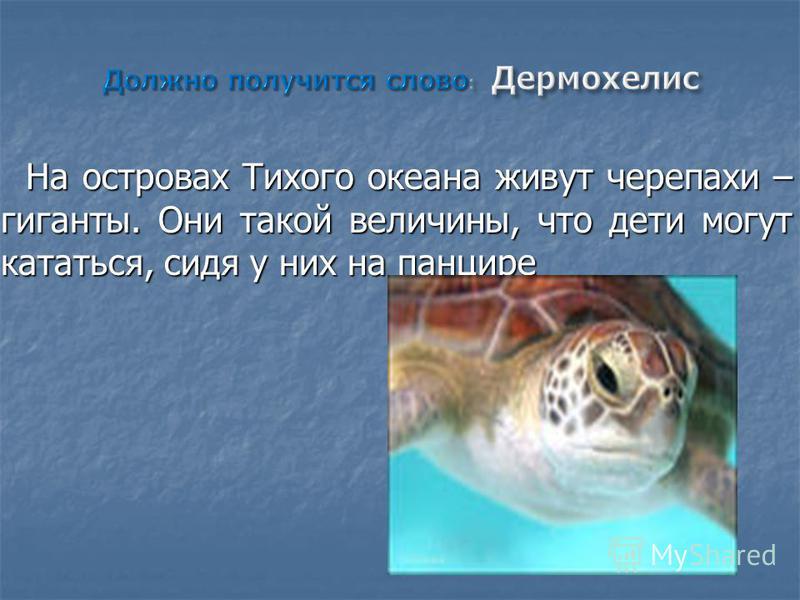 На островах Тихого океана живут черепахи – гиганты. Они такой величины, что дети могут кататься, сидя у них на панцире На островах Тихого океана живут черепахи – гиганты. Они такой величины, что дети могут кататься, сидя у них на панцире