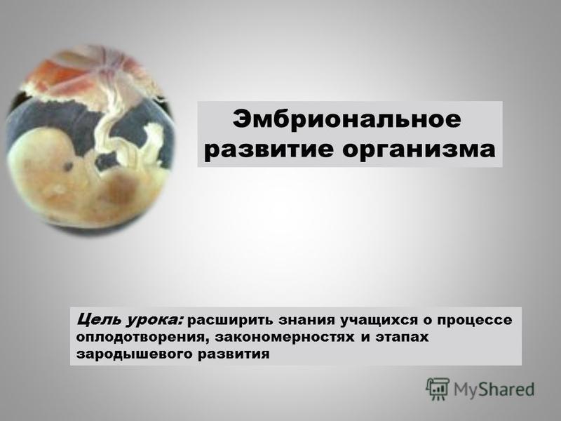 Цель урока: расширить знания учащихся о процессе плодатворения, закономерностях и этапах зародышевого развития Эмбриональное развитие организма