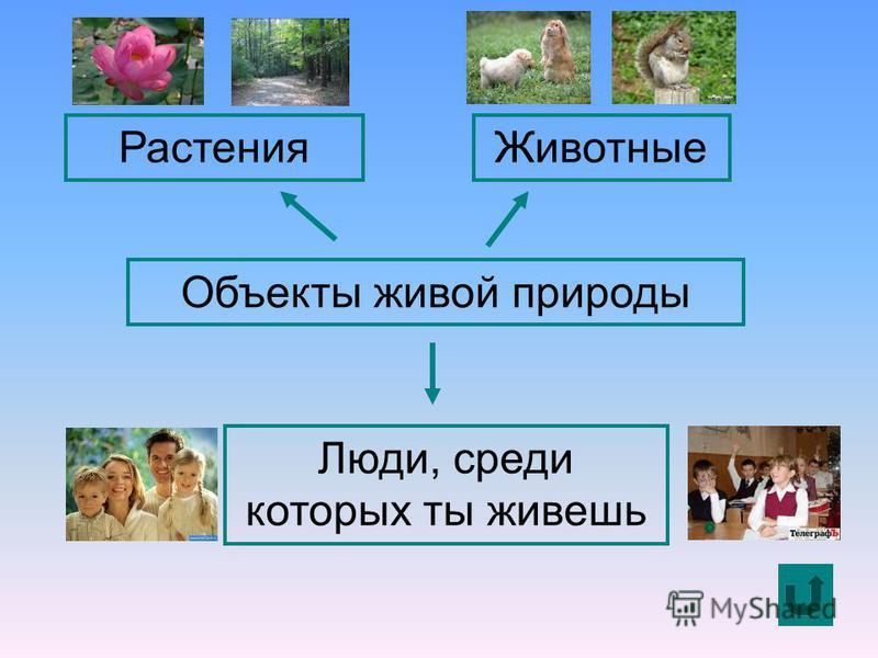 Объекты живой природы Растения Животные Люди, среди которых ты живешь
