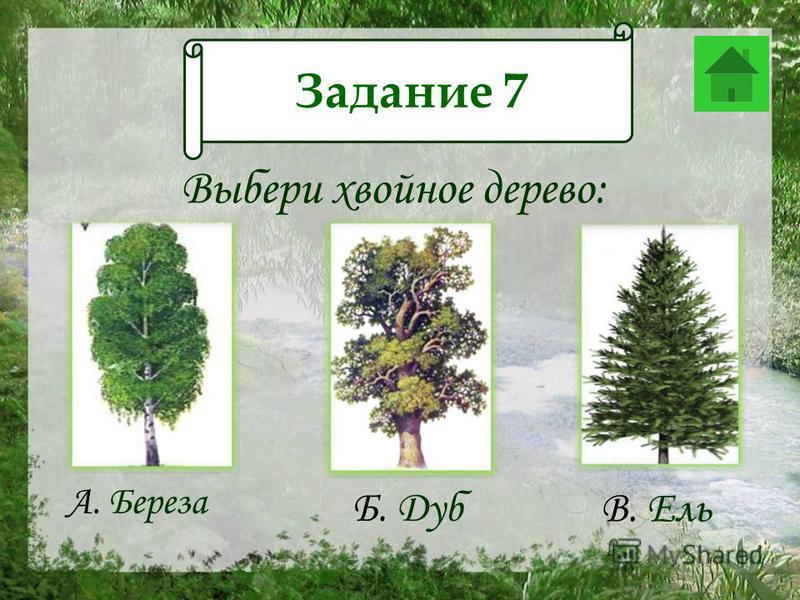 Задание 12 Выбери хвойное дерево: А. Береза Б. Дуб В. Ель Задание 7