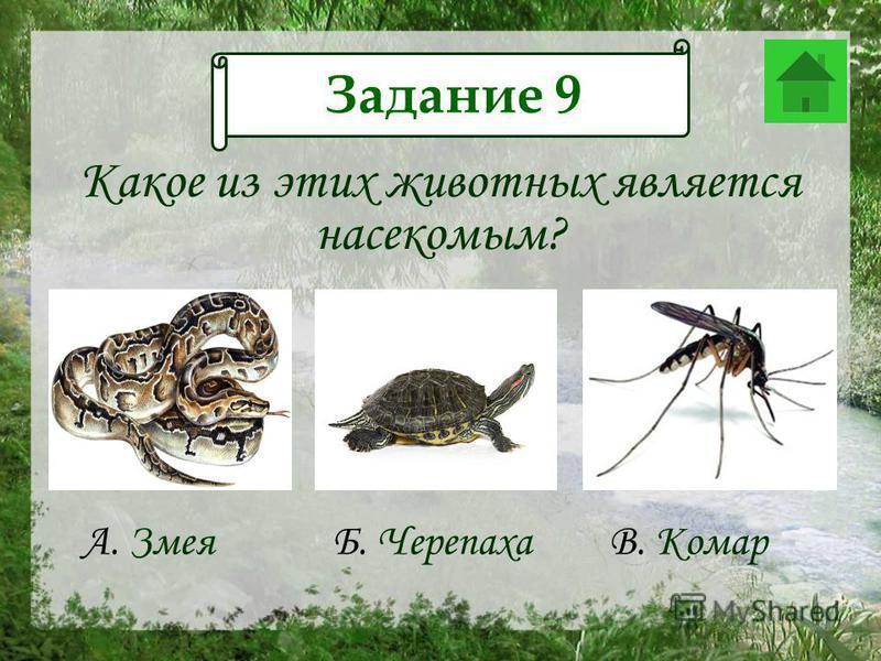 Какое из этих животных является насекомым? Задание 9 А. ЗмеяБ. ЧерепахаВ. Комар