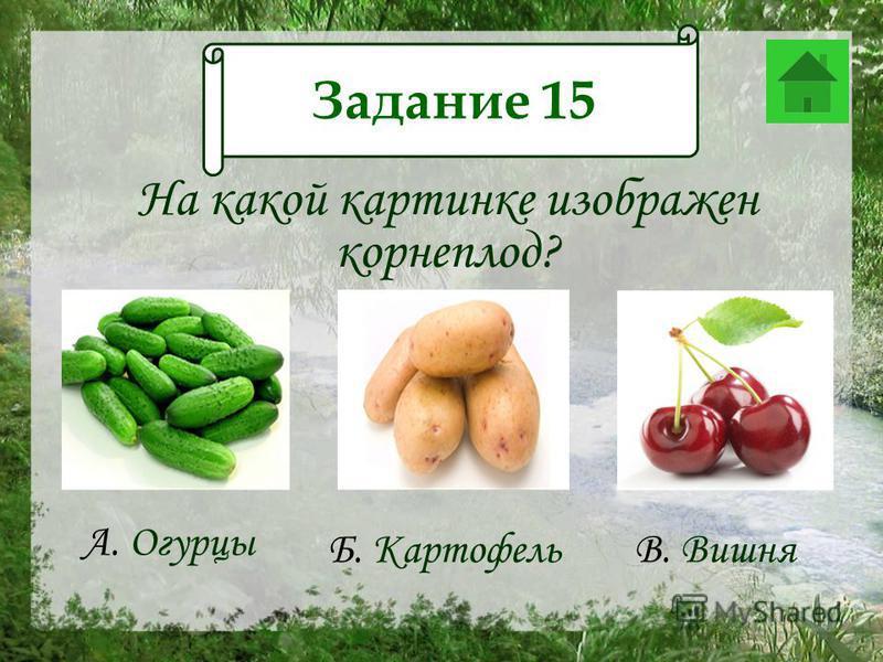 Задание 12 На какой картинке изображен корнеплод? А. Огурцы Б. Картофель В. Вишня Задание 15