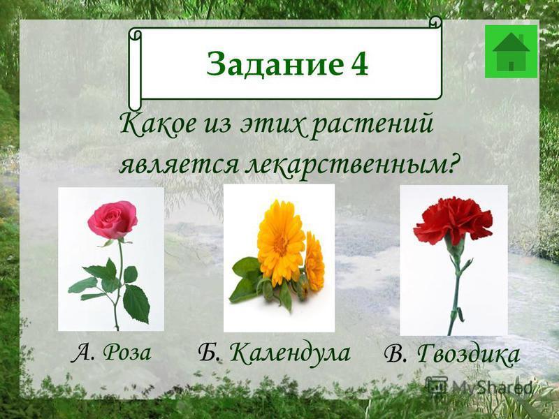 Задание 12 Какое из этих растений является лекарственным? А. Роза В. Гвоздика Б. Календула Задание 4