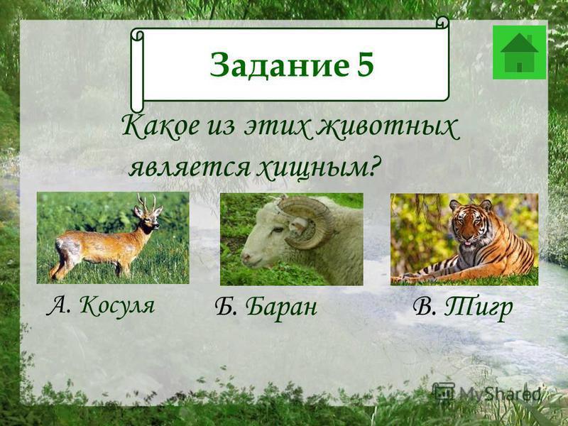 Задание 12 Какое из этих животных является хищным? А. Косуля Б. Баран В. Тигр Задание 5