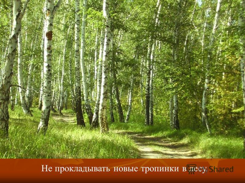Не прокладывать новые тропинки в лесу.