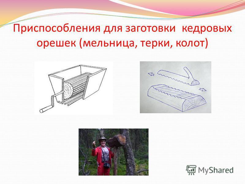 Приспособления для заготовки кедровых орешек (мельница, терки, колот)