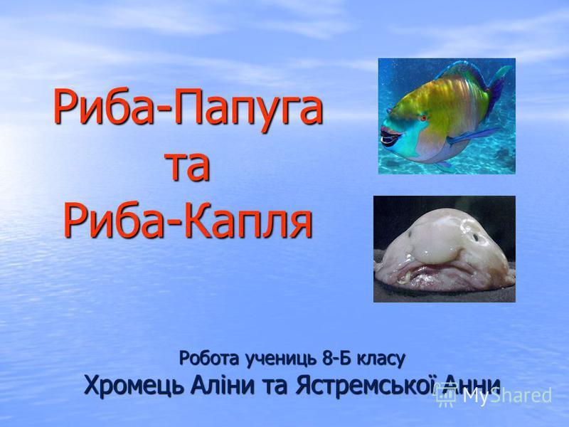 Риба-Папуга та Риба-Капля Робота учениць 8-Б класу Хромець Аліни та Ястремської Анни
