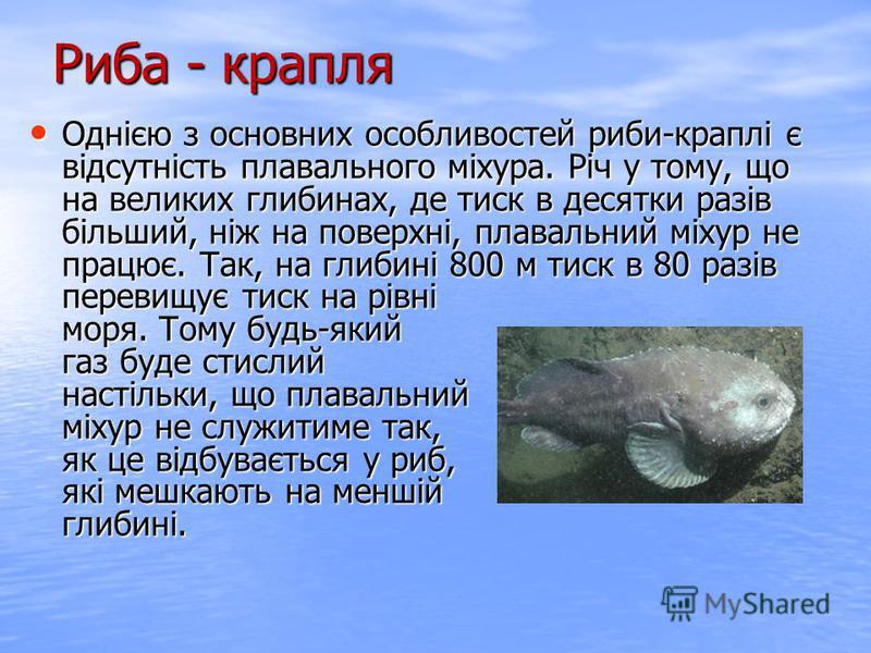 Однією з основних особливостей риби-краплі є відсутність плавального міхура. Річ у тому, що на великих глибинах, де тиск в десятки разів більший, ніж на поверхні, плавальний міхур не працює. Так, на глибині 800 м тиск в 80 разів перевищує тиск на рів