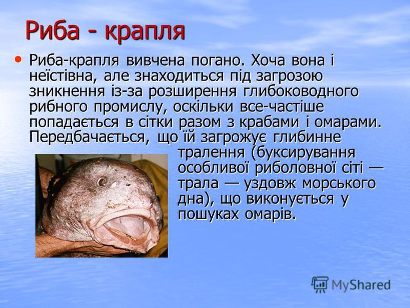 Риба-крапля вивчена погано. Хоча вона і неїстівна, але знаходиться під загрозою зникнення із-за розширення глибоководного рибного промислу, оскільки все-частіше попадається в сітки разом з крабами і омарами. Передбачається, що їй загрожує глибинне тр