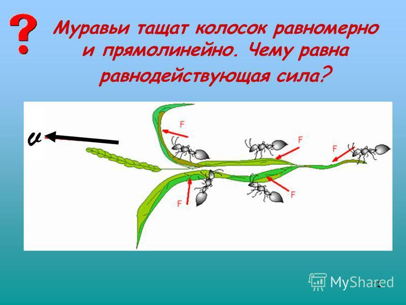 12 Муравьи тащат колосок равномерно и прямолинейно. Чему равна равнодействующая сила ? v