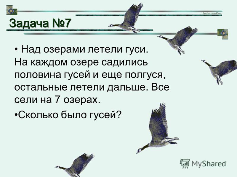 Над озерами летели гуси. На каждом озере садились половина гусей и еще полгуся, остальные летели дальше. Все сели на 7 озерах. Сколько было гусей? Задача 7