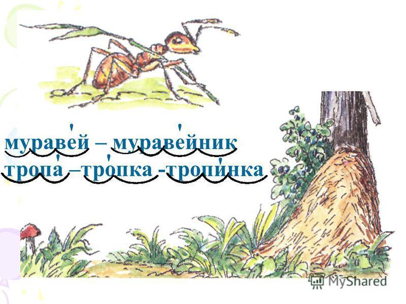 муравей – муравейник тропа –тропка -тропинка '' '' '