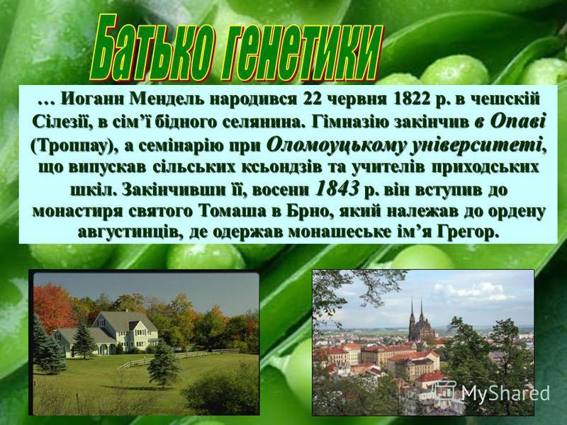 … Иоганн Мендель народився 22 червня 1822 р. в чешскій Сілезії, в сімї бідного селянина. Гімназію закінчив в Опаві (Троппау), а семінарію при Оломоуцькому університеті, що випускав сільських ксьондзів та учителів приходських шкіл. Закінчивши її, восе