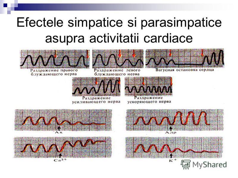 Efectele simpatice si parasimpatice asupra activitatii cardiace