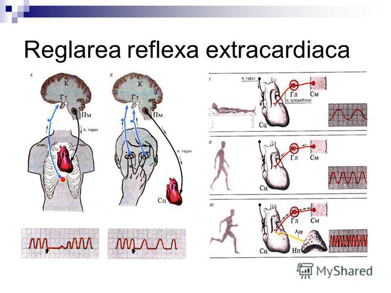 Reglarea reflexa extracardiaca