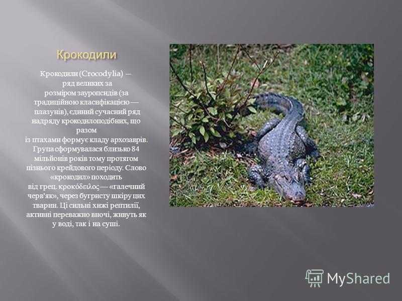 Крокодили Крокодили (Crocodylia) ряд великих за розміром зауропсидів ( за традиційною класифікацією плазунів ), єдиний сучасний ряд надряду крокодилоподібних, що разом із птахами формує кладу архозаврів. Група сформувалася близько 84 мільйонів років