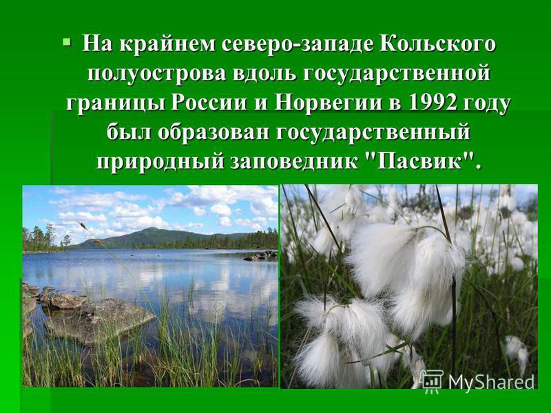 На крайнем северо-западе Кольского полуострова вдоль государственной границы России и Норвегии в 1992 году был образован государственный природный заповедник