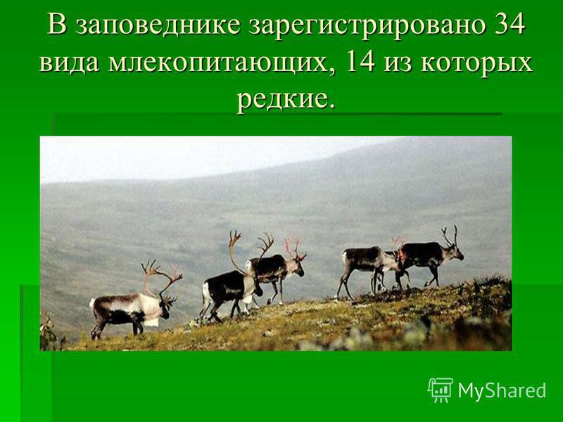 В заповеднике зарегистрировано 34 вида млекопитающих, 14 из которых редкие.
