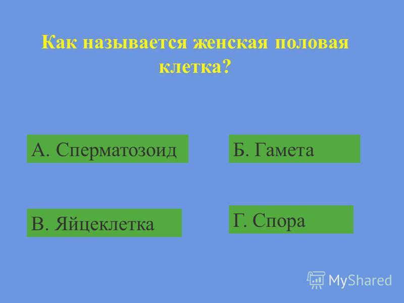 Представитель листостебельных зелёных мхов: А. СфагнумБ. Маршанция В. Кукушкин лёнГ. Орляк
