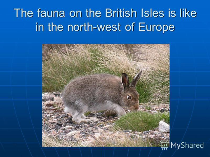 The fauna on the British Isles is like in the north-west of Europe