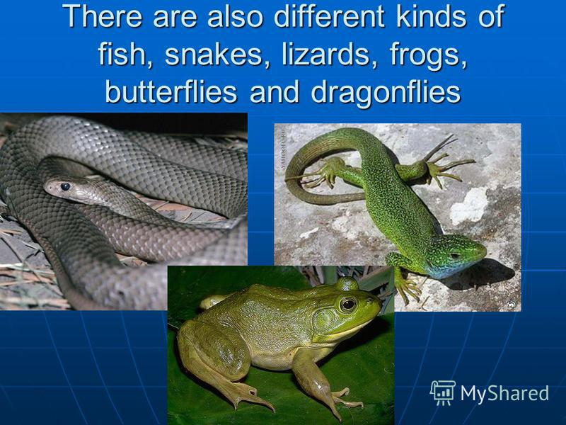 There are also different kinds of fish, snakes, lizards, frogs, butterflies and dragonflies