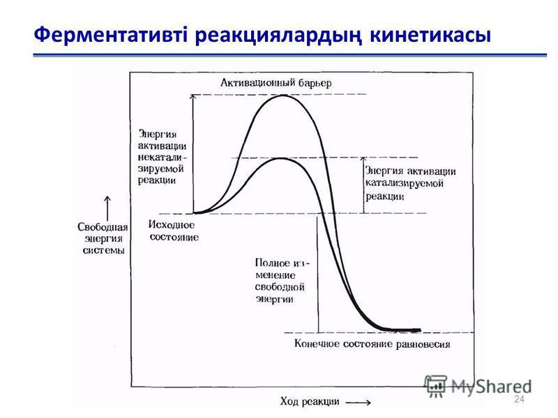 Ферментативті реакциялардың кинетикасы 24