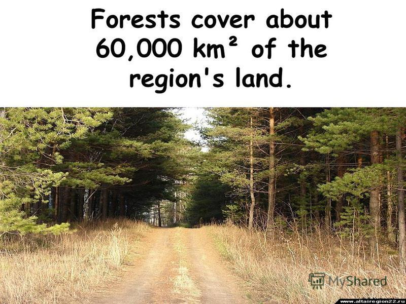 Forests cover about 60,000 km² of the region's land.