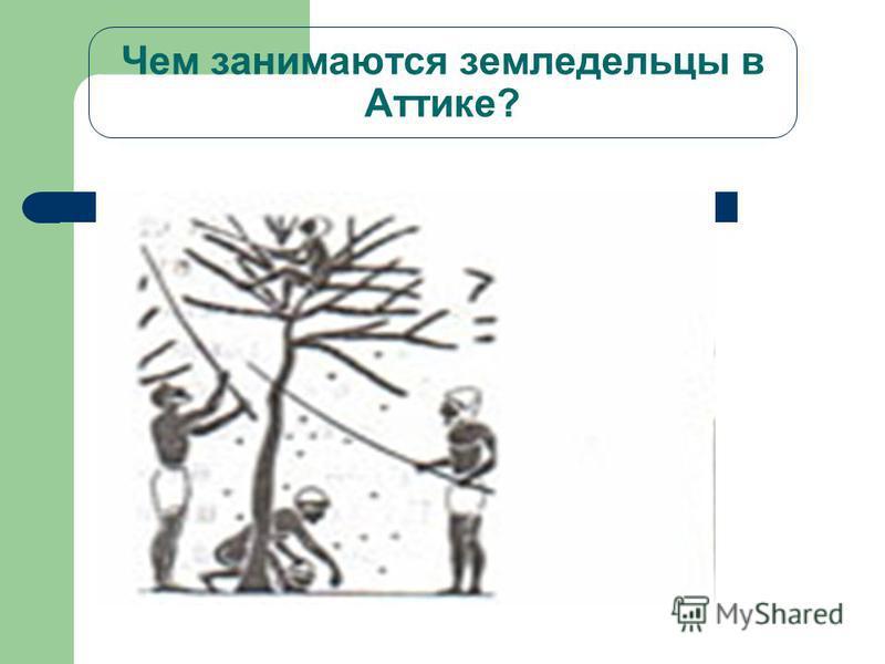 Чем занимаются земледельцы в Аттике?