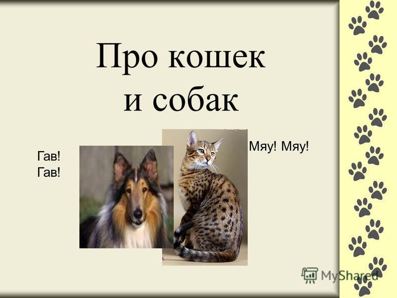 Про кошек и собак Мяу! Гав!