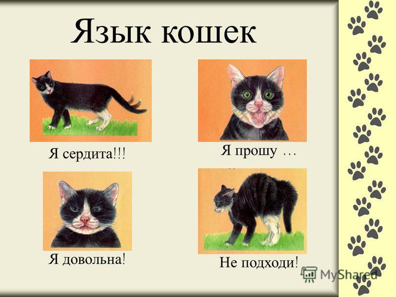 Язык кошек Я сердита !!! Я довольна ! Я прошу … Не подходи !