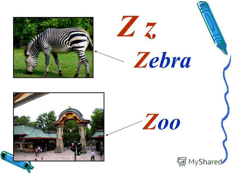 Z z Zebra Zoo