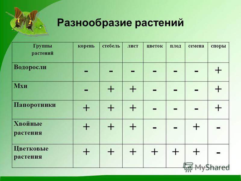 Разнообразие растений Группы растений кореньстебельлистцветокплодсеменаспоры Водоросли ------+ Мхи -++---+ Папоротники +++---+ Хвойные растения +++--+- Цветковые растения ++++++-