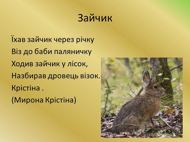 Зайчик Їхав зайчик через річку Віз до баби паляничку Ходив зайчик у лісок, Назбирав дровець візок. Крістіна. (Мирона Крістіна)