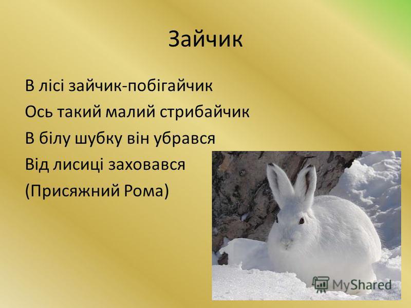 Зайчик В лісі зайчик-побігайчик Ось такий малий стрибайчик В білу шубку він убрався Від лисиці заховався (Присяжний Рома)