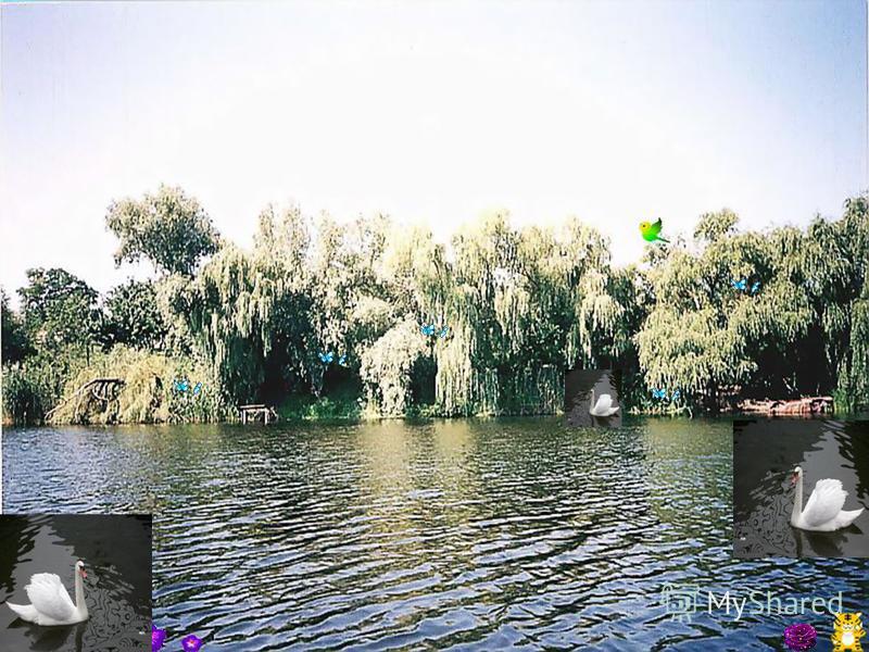 Непогано було б і ставок зробити диво - озером. Адже не даремно перші поселенці обрали річку Чаплинку для проживання. У 50- х частину русла річки перебудували у ставок. Довгий час ставок був улюбленим місцем відпочинку мешканців Петриківки і приїзджи