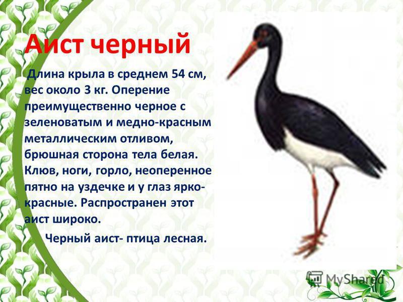 Аист черный Длина крыла в среднем 54 см, вес около 3 кг. Оперение преимущественно черное с зеленоватым и медно-красным металлическим отливом, брюшная сторона тела белая. Клюв, ноги, горло, неоперенное пятно на уздечке и у глаз ярко- красные. Распрост