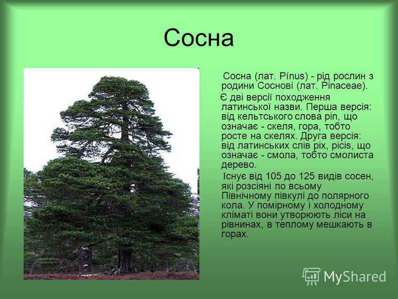 Сосна Сосна (лат. Pínus) - рід рослин з родини Соснові (лат. Pinaceae). Є дві версії походження латинської назви. Перша версія: від кельтського слова pin, що означає - скеля, гора, тобто росте на скелях. Друга версія: від латинських слів pix, picis,