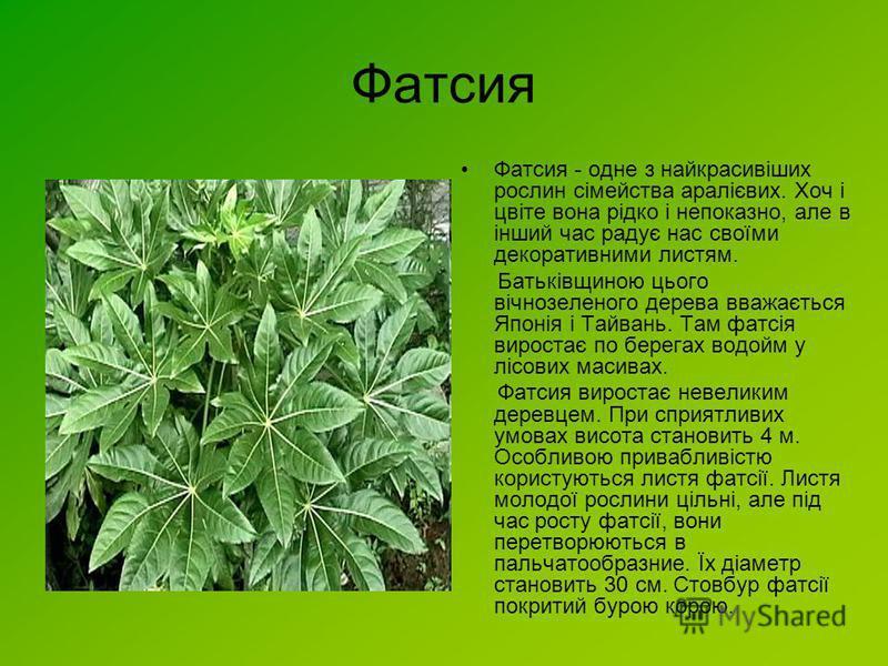 Фатсия Фатсия - одне з найкрасивіших рослин сімейства аралієвих. Хоч і цвіте вона рідко і непоказно, але в інший час радує нас своїми декоративними листям. Батьківщиною цього вічнозеленого дерева вважається Японія і Тайвань. Там фатсія виростає по бе