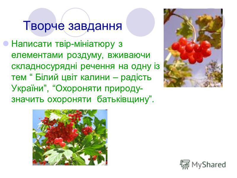 Творче завдання Написати твір-мініатюру з елементами роздуму, вживаючи складносурядні речення на одну із тем Білий цвіт калини – радість України, Охороняти природу- значить охороняти батьківщину.