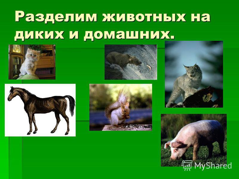 Разделим животных на диких и домашних.