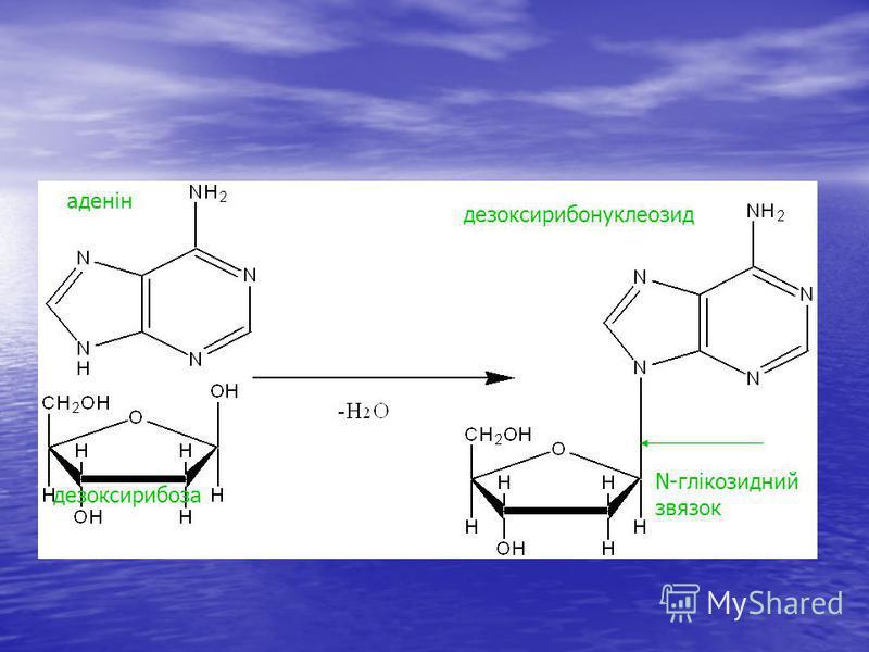 аденін дезоксирибоза дезоксирибонуклеозид N-глікозидний звязок