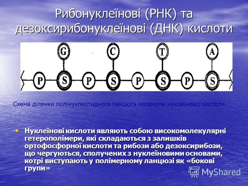 Рибонуклеїнові (РНК) та дезоксирибонуклеїнові (ДНК) кислоти Нуклеїнові кислоти являють собою високомолекулярні гетерополімери, які складаються з залишків ортофосфорної кислоти та рибози або дезоксирибози, що чергуються, сполучених з нуклеїновими осно